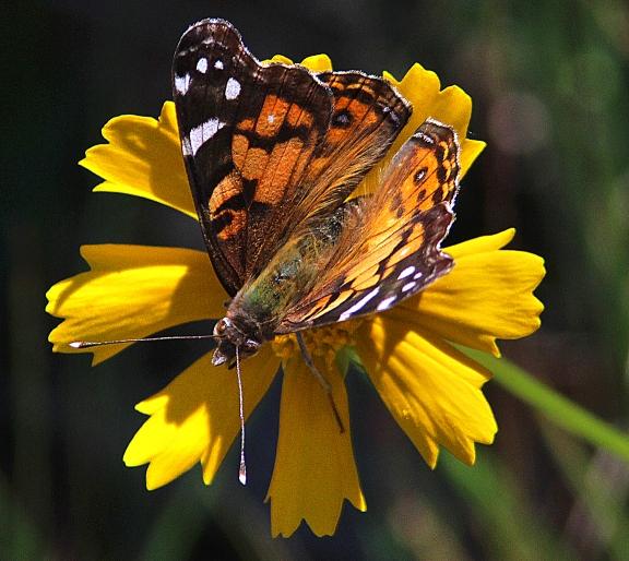 butterflybeauty