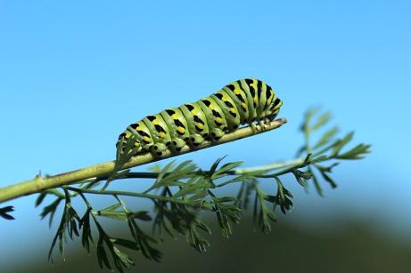 http://photonatureblog.files.wordpress.com/2012/11/caterpillar.jpg