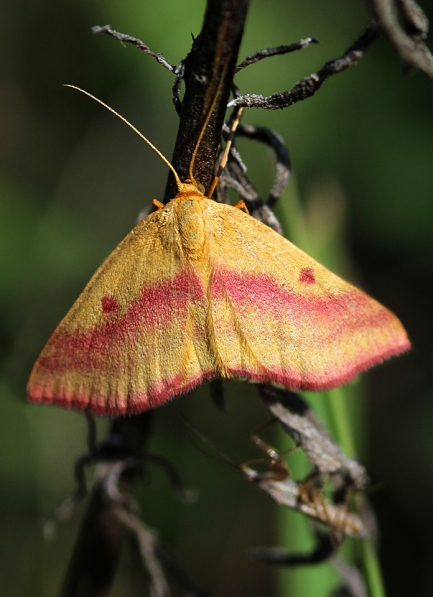 colorfulmoth