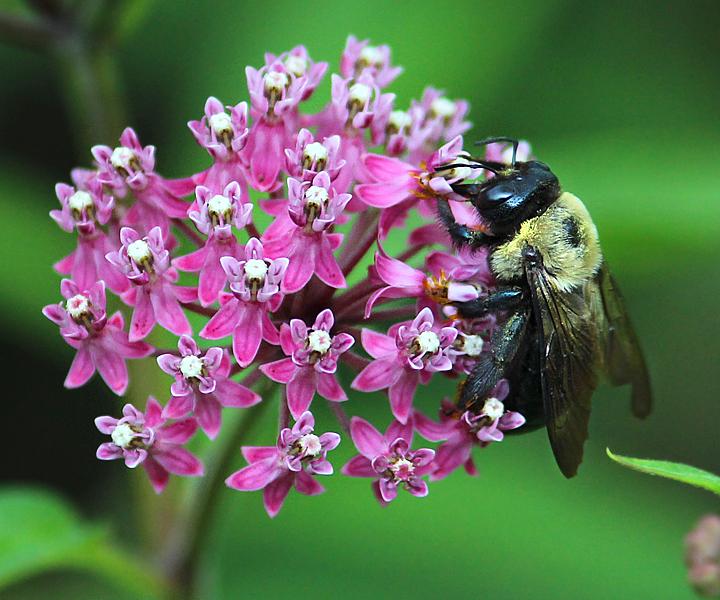 pollination2