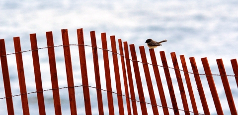 Bird_On_Red_Fence