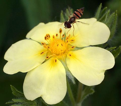 PollinationPlans