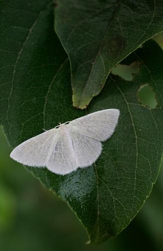 greenwhite1