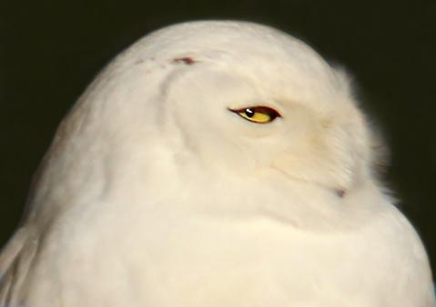 OwlLook