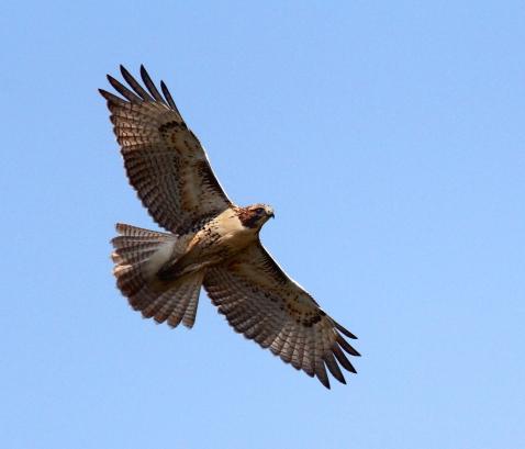 HawkPatterns2