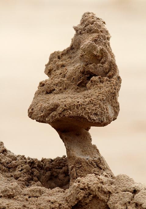SandMushroom1