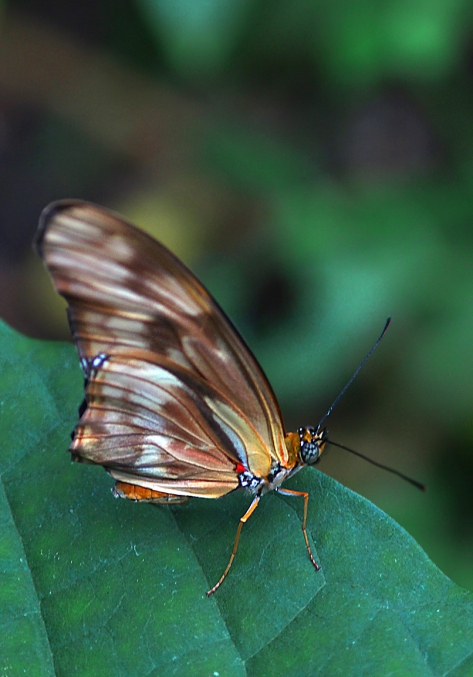 Butterfly_On_Leaf