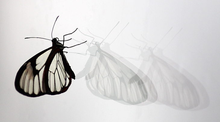Butterfly_Parallel_Universe