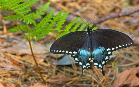 ForestButterfly