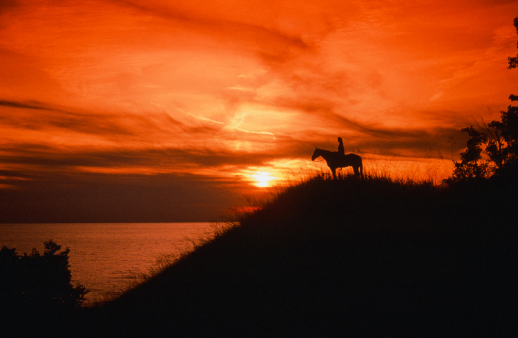 HorseSunset