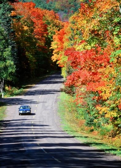 Autumn_Drive