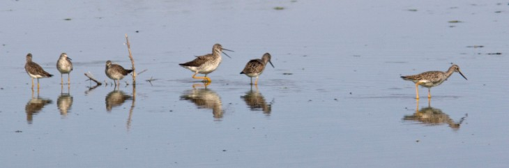 Birds_Wading