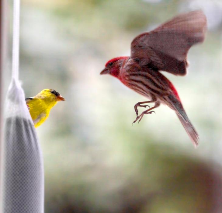 Finch_Meeting
